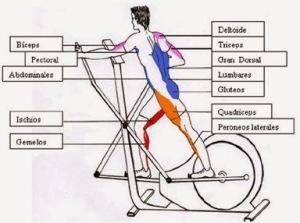 musculos-que-entreno-con-bicleta-eliptica-pesas-running-bb